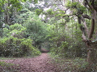 Chintamani Kar Bird Sanctuary