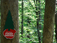 Clemmons Educational State Forest