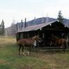 Cold Creek Patrol Cabin - Yellowstone - USA