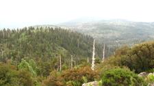 Alerce Costero Natural Monument