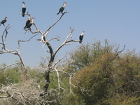 Djoudj National Bird Sanctuary