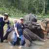 Day At Chiang Mai Elephant Camp