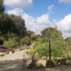 Desert Cactus Garden, Balboa Park