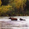 Deshka River Alaska