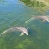 Dolphins Plus - Key Largo - Florida Keys
