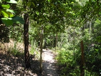 Shady Creek Trail