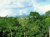 Dzanga Sangha Special Reserve