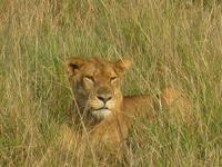 Book Now - Wildlife Safari Queen Elizabeth National Park
