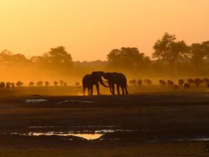 Hwange Safari Package Photos