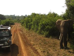 Wildlife Safari at Tsavo East and West National Park Photos