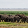 2 Days Great Amboseli Safari