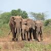 Norte de Presupuesto Safari Circuito 4 días en Tanzania