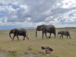 Amboseli, Masai Mara and Lake Nakuru Fotos