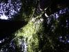 Emerald Ridge And Tall Trees Trails