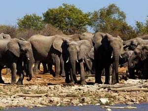 Etosha Safari Tour Photos