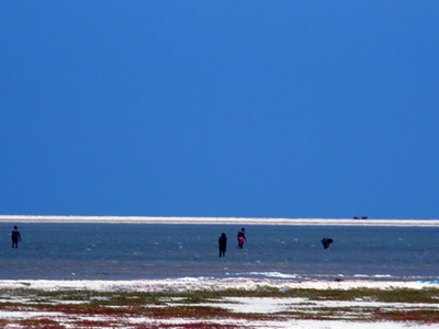 Fishermen Catching Fish With Their Bare Hands In The Shallows