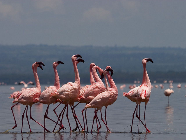 3 Nights 4 Days Masai Mara and Lake Nakuru Safari Photos