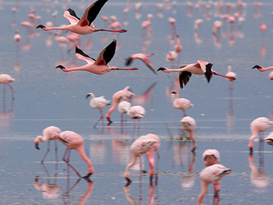 7 Days Tanzania Flamingo Safari Photos
