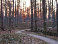 Bosque de Soignes