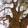 Fruita Mail Tree Trail Stop - Capitol Reef - USA