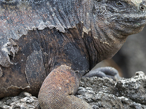 Amazing Galapagos Fotos
