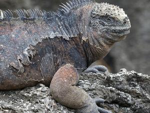 Isla Galapagos 4 días
