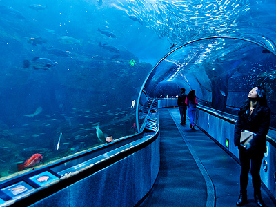 Glass Tunnel At Aquarium Of The Bay