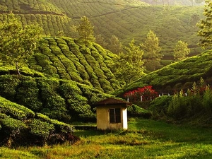 Exotic Kerala 7 Days