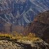 Golden Trees Between Chele & Gyakar - Mustang Annapurna - Nepal