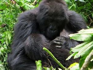 5 DAYS Bwindi - Gorilla & Queen Elizabeth Safari Fotos