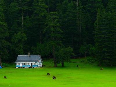Grasslands Of Khajjiar
