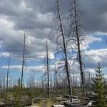 Grebe Lake Trail