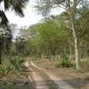 Gorongosa Terrain