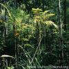 Hala-Bala Reserva de Vida Silvestre