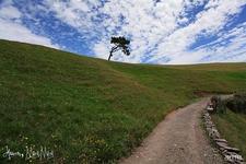 Hobbiton - Queenstown - South Island NZ
