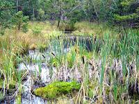 Hochmoor Nature Park