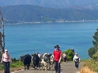 Región de Wellington