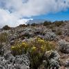 Horombo Huts - Rombo Kilimanjaro