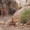 Horse & Pack Animal Trails - Capitol Reef
