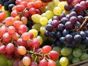 Wine Tour - Krasnodar Region