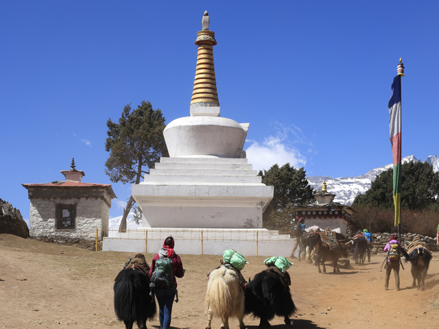 Experience the Himalaya with Local Experts Photos