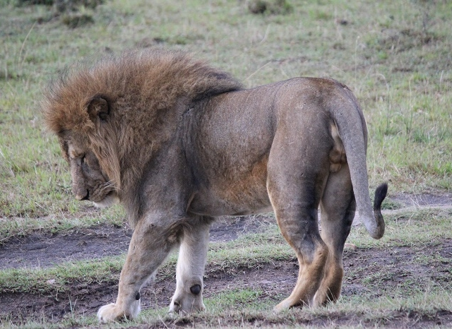 5 Days Kenya Budget Safari Masai Mara Photos