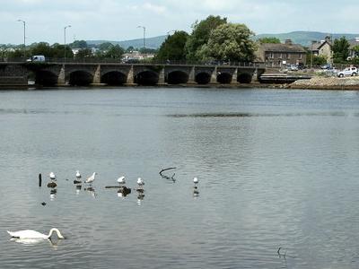 Avoca Estuary And The Nineteen Arches Bridge