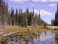 Isa Lake