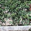 Jardin Botanico-Historico La Concepcion