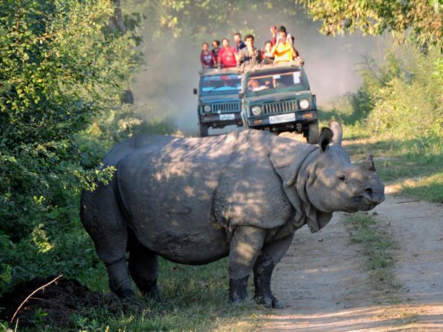 Kaziranga National Park Tour Photos