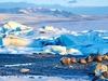 Jokulsarlon Glacier Lagoon - Iceland