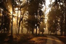 Kanha- The Morning Lights