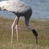 Kanwar Lake Bird Sanctuary