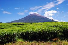 Kerinci Viewed From Kayuaro